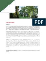 Lista de árboles maderables