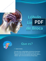 Lóbulo Límbico (NeuroAnatomia)