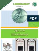 DNA Microarray (Grupal)
