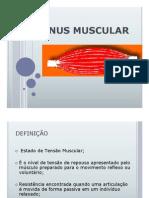 364nus Muscular