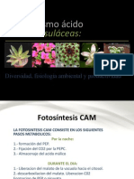 Metabolismo ácido de las crasulaceas (CAM)