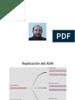 4 - Estructura y Replicacion del ADN Eucariota