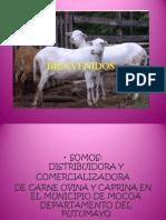 diapositivas ovicarnes