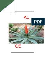 Aloe Ferox Grade 6 Project