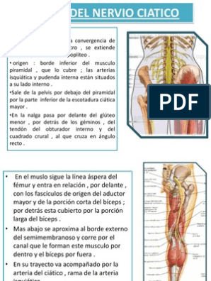 Ciatico rehabilitacion externo nervio popliteo