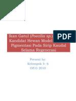 Ikan Gatul (Poecilia Sp