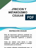 NUTRICION Y METABOLISMO CELULAR