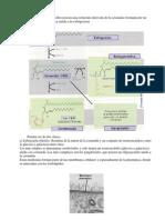 LiPIDOS3_Esteroides