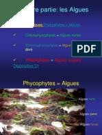 2-Cours app végétatif algues