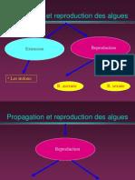 3-Cours Reproduction Algues (2)