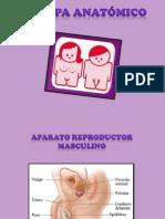 MAPA ANATÓMICO 7MO-10MO