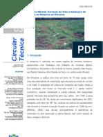119 Cit032006 Melancia Roberto