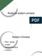 anatomi urinaria
