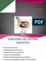FISIOLOGÍA DIGESTIVA DE LAS AVES