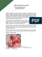 INFORME DE LABORATORIO DE BIOLOGÍA 1