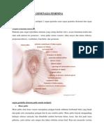 Anatomi Organa Genetalia Feminina