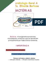 _BACTÉRIAS