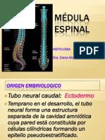 Medula Espinal y Meninges