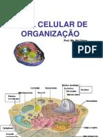 Nivel Celular de Organização
