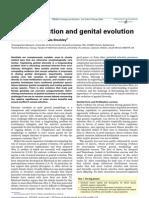 Sexual Selection and Genital Evolution