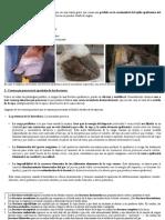 Fracturas de La Epidermis Podal (Cuartos)