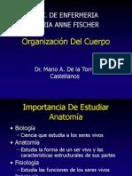 1. Organización Del Cuerpo #1
