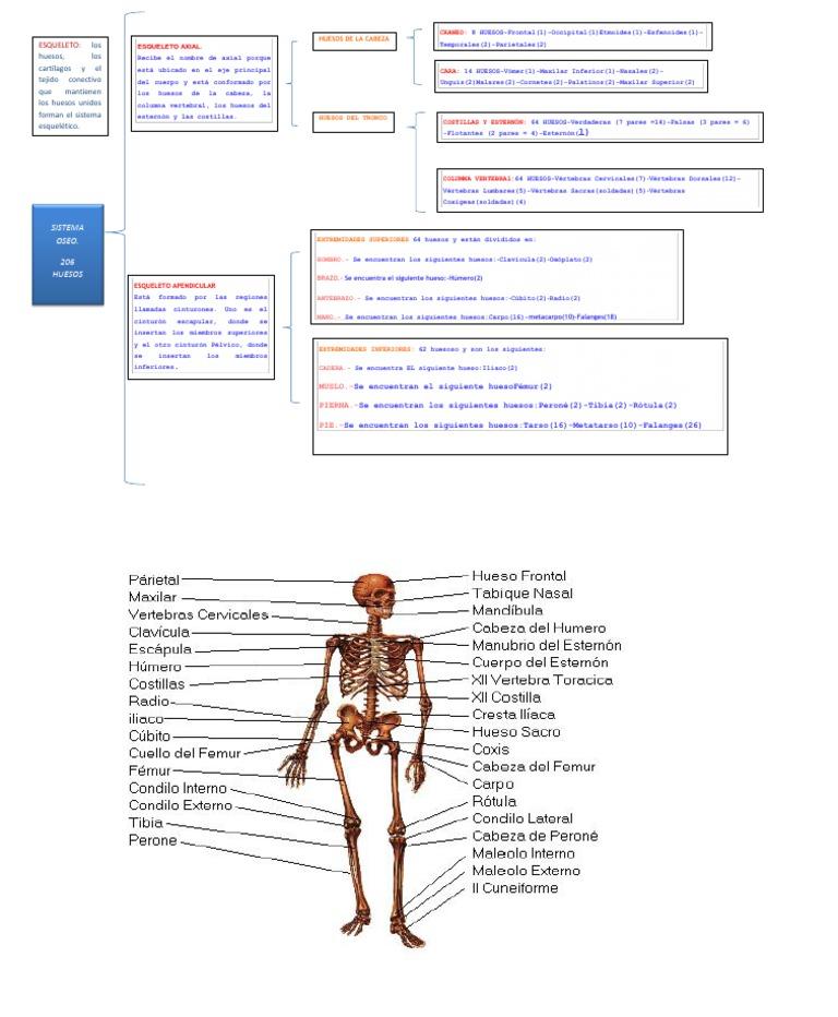 Único Mapa De Hueso De Cuerpo Humano Bosquejo - Imágenes de Anatomía ...