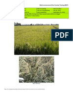 2012WS MET 1-Irrigated - Week 13 (September) Isabela
