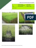 2012WS MET 1-Irrigated - Week 11 (August) Isabela