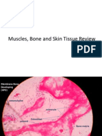 Muscles, Bone, Skin Tissue Review