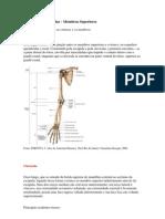 Esqueleto Apêndicular