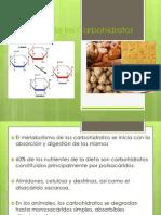 Absorcion_y_Digestión_de_los_Carbohidratos