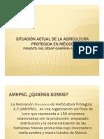 Situacion Actual de La Agricultura Protegida en Mexico