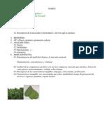 Trabajo Final Mercadotecnia Tortilla de Nopal Act 070610
