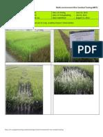 2012WS MET 2-Irrigated - Week 11 (August) Isabela