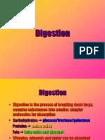 Digestive System 2583 Edit