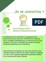 Activación de linfocitos t