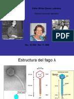 Clase Fago Lambda y Otros2