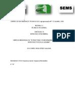 Extructura y Funcionamiento Del Aparato Reproductor