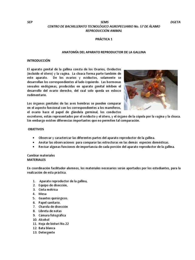Increíble Anatomía Del Oviducto De Pollo Regalo - Imágenes de ...