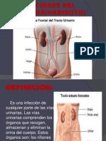Infecciones Del Tracto Urinario(Itu)