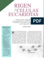 De Duve Christian, Origen de las células eucariotas
