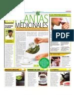 Bondades de Las Plantas Medicinales