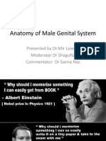 Anatomy of Male Genital System