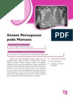 4. Sistem Pernafasan Pada Manusia