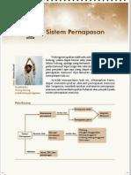 4. Sistem Pernafasan