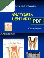 ANATOMIA ..Dentaria