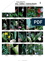 148 Federico Rom-Vegetacion y Epifitas
