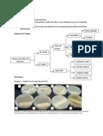 técnicas de cultivo y siembra de Bacterias