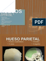 Hueso Parietal y Occipital